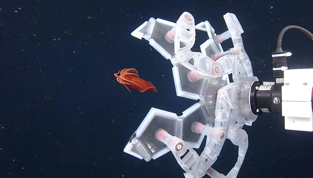 Кредит: Исследовательский институт аквариума в заливе Монтерей-Бей (MBARI)