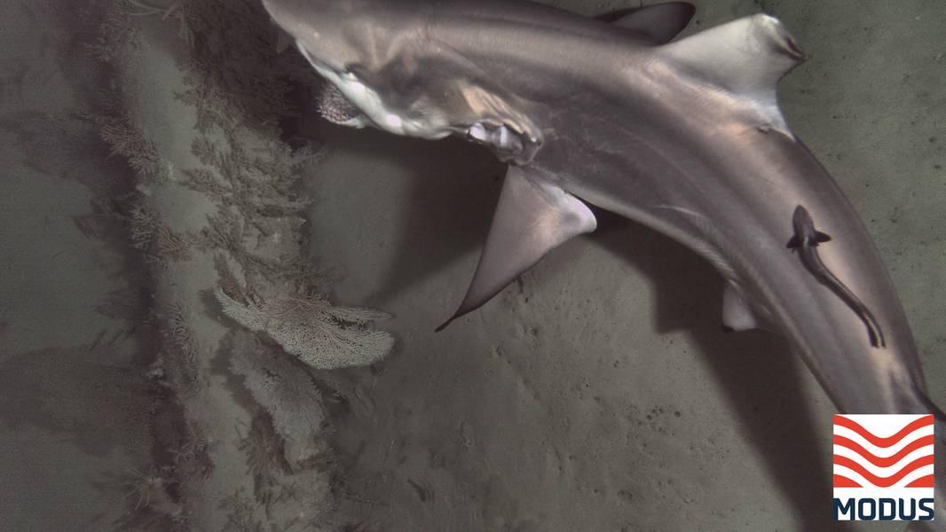 الصور: مودوس قاع البحر التدخل