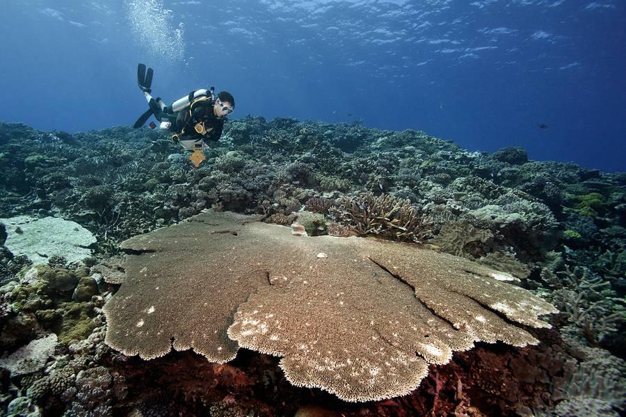 图片来源:©Khaled bin Sultan Living Oceans Foundation