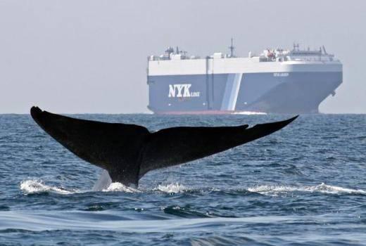 (الصورة: NOAA)