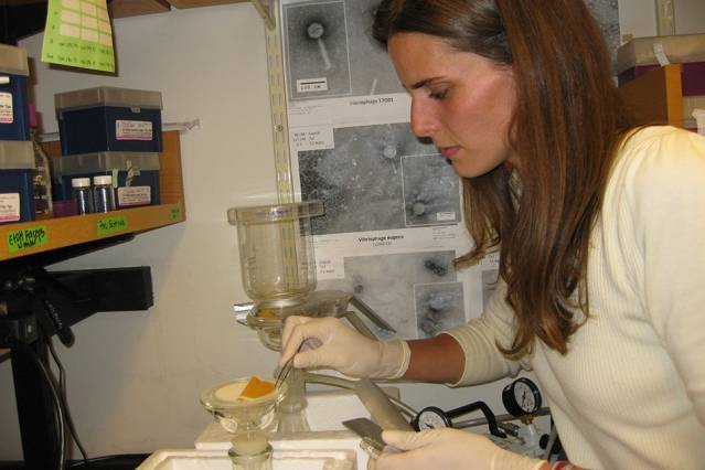 Postdoc凯思琳·考夫曼(Kathryn Kauffman)在实验室处理海水样本,以提取他们所含的细菌感染病毒。 (图:Alison Takemura)