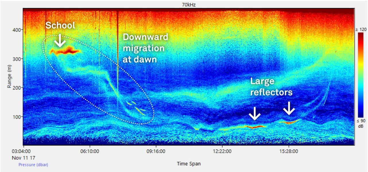echogram، بسبب، diel، plankton، migration. (الصورة: Nortek)