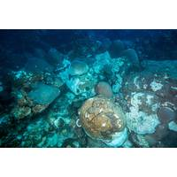 Corals affected by the mortality event at East Flower Garden Bank. (Image: FGBNMS/Schmahl)