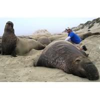 Deep diving animals & Michael Tift: Photo credit NMFS permit #14636 SIO