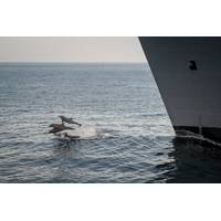 Dolphins jump out of the water near the Military Sealift Command dry cargo and ammunition ship USNS Alan Shepard (T-AKE-3) during an underway replenishment with the guided-missile destroyer USS Stockdale (DDG 106), not pictured. (U.S. Navy photo by Mass Communication Specialist 2nd Class David Hooper/Released)