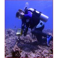 Hanna Ake, field researcher working for Professor Hunter Lenihan, uses the Pulse 8X detector to relocate specimens in Moorea, French Polynesia