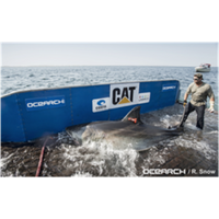 Image courtesy of OCEARCH