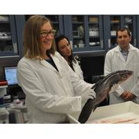 Karina Gould, Minister for Democratic Institutions, on behalf of Dominic LeBlanc, Minister of Fisheries, Oceans and the Canadian Coast Guard, announces new funding for the fight against Asian carps. (Photo: Fisheries and Oceans Canada)