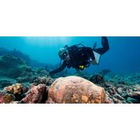 Dr. Kelly Gleason investigates a ginger jar at the Two Brothers shipwreck site (Credit: NOAA)