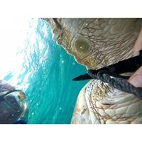 Mike Beres and Greg Johnson, members of the Naval Undersea Warfare Center Division Newport™s Atlantic Underwater Test and Evaluation Center (AUTEC) Fire and Emergency Services Water Rescue Team cut rope from an endangered green sea turtle on July 13. The turtle was found in AUTEC™s harbor on Andros Island in the Bahamas.