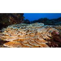 The National Marine Sanctuary of American Samoa (Photo: NOAA)