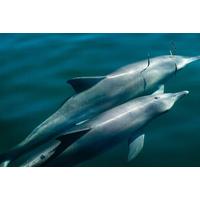 Photo courtesy of The Dolphin Decade