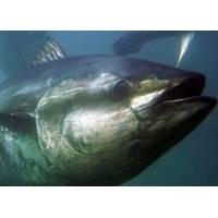 Photo courtesy of NOAA