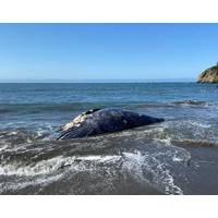 (Photo: The Marine Mammal Center)