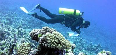 The 2016 coral reef grants and cooperative agreements issued by the NOAA Coral Reef Conservation Program include work to monitor the condition of reefs, promote reef resilience in the face of a changing climate, and enhance sustainable fisheries. (Credit: NOAA)
