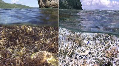 Before and after images of heat-stress related coral bleaching in American Samoa, in the tropical Pacific. (XL Catlin Seaview Survey / NOAA)