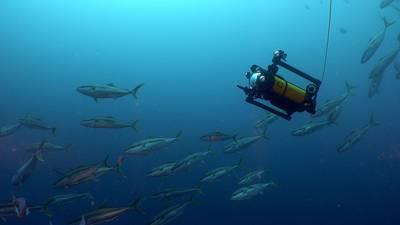 Image courtesy Boxfish Research