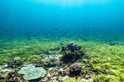 The Saya de Malha Bank is part of the Mascarene Plateau and located between Mauritius and Seychelles in the Indian Ocean. It is the largest seagrass meadow in the world and one of the biggest carbon sinks in the high seas. (© Tommy Trenchard / Greenpeace)