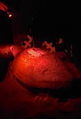 Anexando um farol GPS Argos ao casco de uma tartaruga (Foto: NYK Line)
