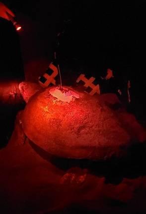 Anbringen eines Argos-GPS-Leuchtfeuers an einem Schildkrötenpanzer (Foto: NYK Line)