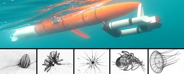 Zooglider (em cima) com uma seleção de imagens de zooplâncton que o robô capturou. Foto de cima: Benjamin Whitmore