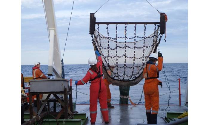Deployment of a 2 m scientific beam trawl used for the collection of mobile epibenthic species. (Photo: Fugro)