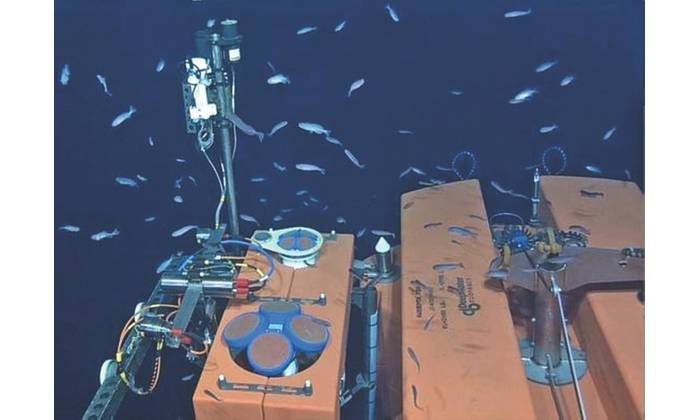 Fig.3. Located at 200 m depth, two ADCPs (150 kHz, 5-beam 600 kHz) are installed on the fixed platform of an SPM. (Credit: NSF-OOI/UW/ISS; Dive R1832, VISIONS '15 expedition)