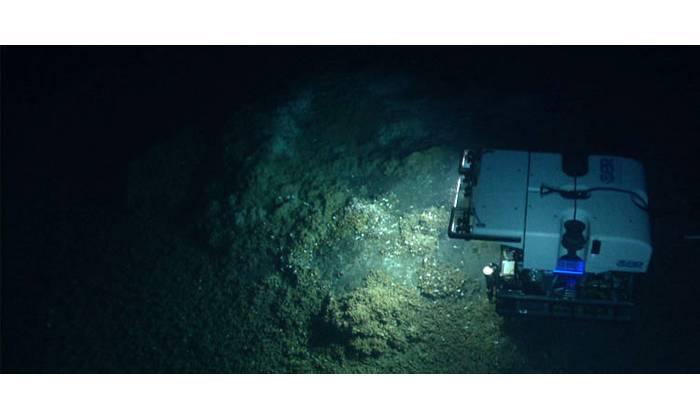 Image courtesy of the NOAA Okeanos Explorer Program