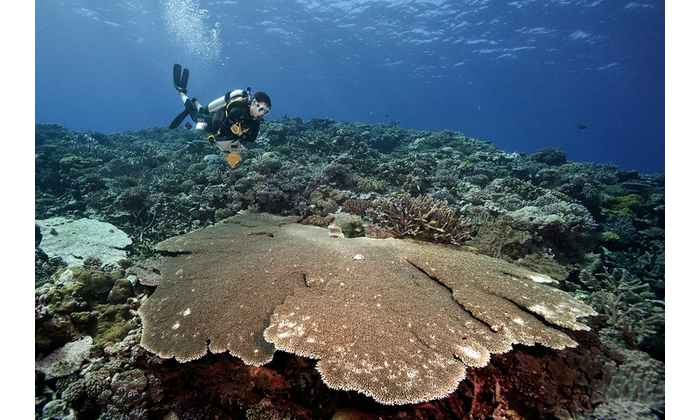 Photo credit: ©Khaled bin Sultan Living Oceans Foundation