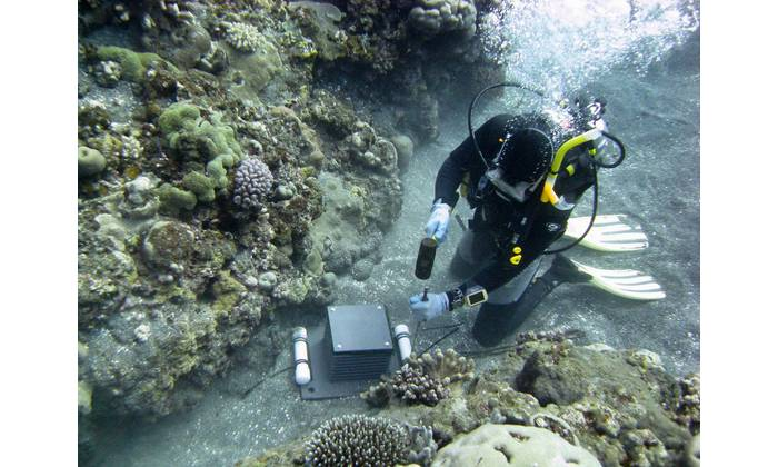 Russell Reardon pounds stakes into the substrate to secure an Autonomous Reef Monitoring Structure (ARMS) in place. They are retrieved after three years. (Photo: NOAA Fisheries/Steve McKagan).