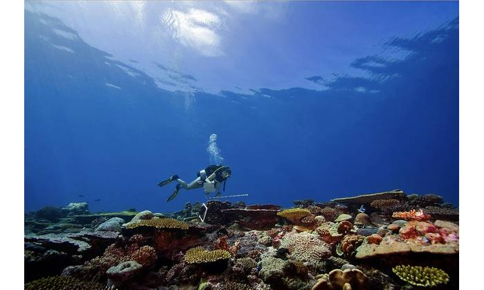 A scientist surveys a coral reef on the Khaled bin Sultan Living Ocean Foundation's Global Reef Expedition. Copyright KSLOF/Ken Marks