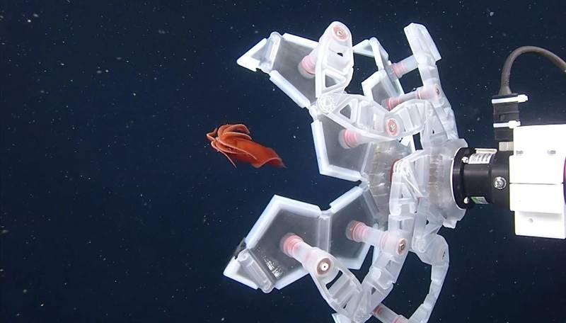 Credit: Monterey Bay Aquarium Research Institute (MBARI)