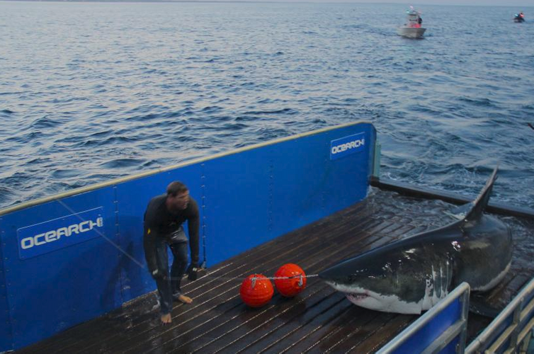image: Ocearch