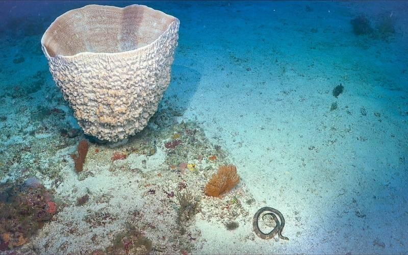 All images courtesy Schmidt Ocean Institute