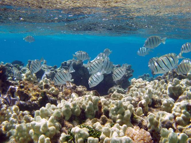 NOAA awards more than $8 million in grants and cooperative agreements for coral reef conservation this year. Funded projects will support efforts in seven U.S. states and territories, the Caribbean and Micronesia. (Credit: Claire Fackler, NOAA)