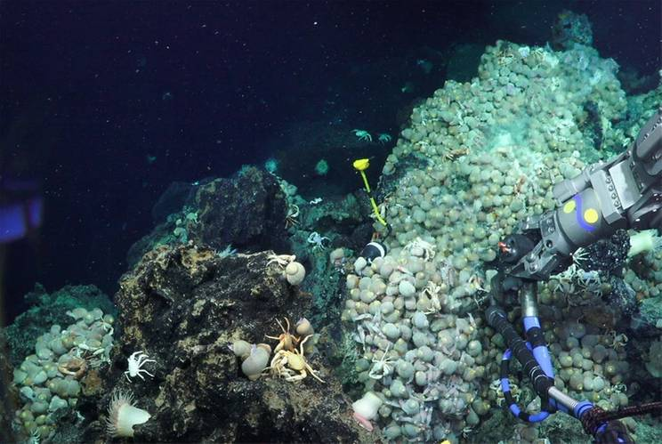 (Photo: Schmidt Ocean Institute)