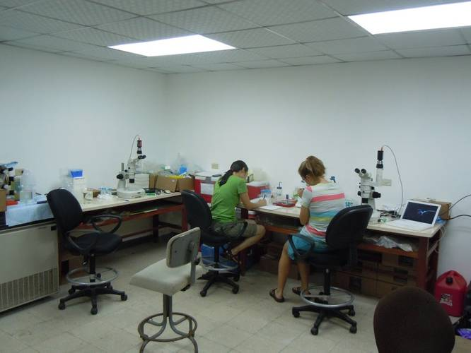 Researchers examining tuna embryos at the Achotines Laboratory in Panama. (Image: John Incardona, NOAA)
