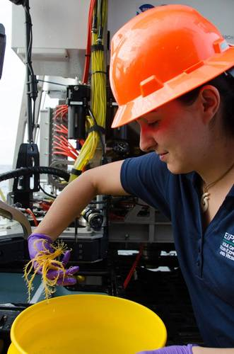Samples Study: Dr. Nancy Foster Scholar Alexandra Avila recovers a crinoid sample collected using a remotely operated vehicle during a dive in the Gulf of Mexico. Photo: NOAA