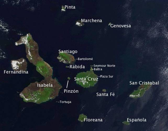 A satellite image of the Galapagos Islands in 2002. Almost all of the Galapagos Penguins live along the western coasts of Isabela and Fernandina and two–thirds of the birds reside along the southwestern bulge of Isabela. (Image: NASA)