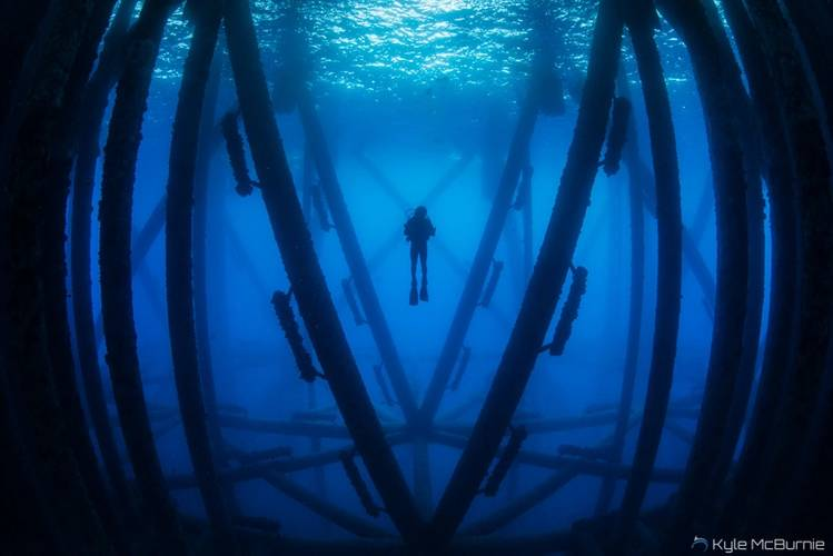 A scuba diver investigates the marine life harbored beneath an oil rig off the coast of California. (Photo: Kyle McBurnie)