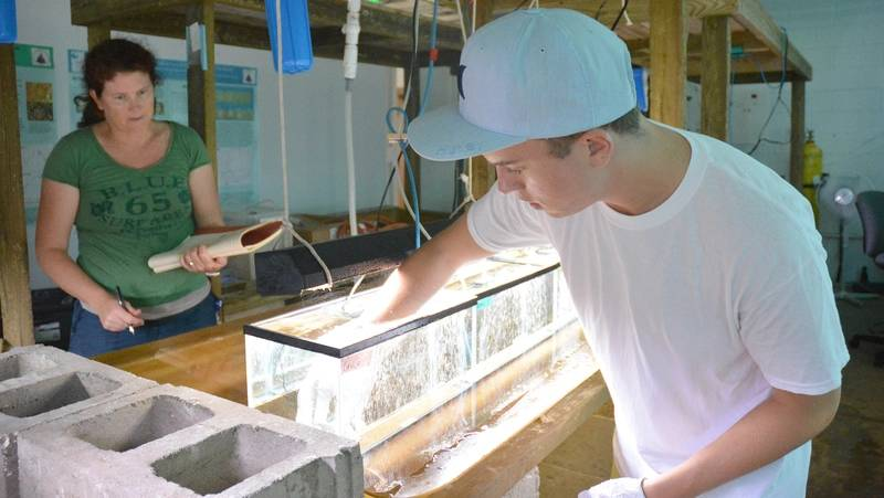 Sean McNally and his mentor at the Bermuda Institute of Ocean Sciences, Rachel Parsons, place corals in the tanks at the beginning of the experiment. (Photo: Bermuda Institute of Ocean Sciences.)