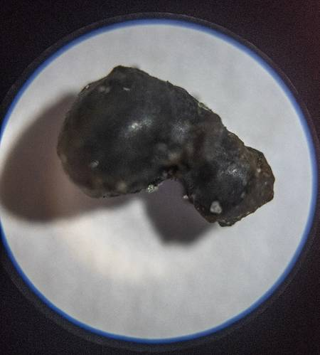 "This ""fusion crust"" fragment retrieved from Olympic Coast National Marine Sanctuary is believed to be a piece of meteorite exterior that melted as it entered Earth's atmosphere. (Photo: Susan Poulton/OET)"