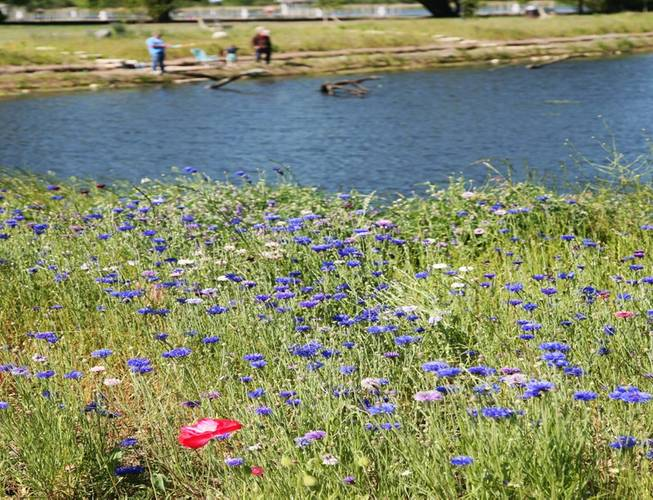 White Lake Causeway after restoration shows healthy wildlife and new recreational opportunities. (Photo: EPA)
